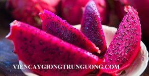 cong-dung-tuyet-voi-cua-thanh-long-ruot-do-20150703093437728-1435910596721-71-0-378-600-crop-1435910790727