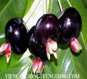 exotic_fruits_main_173ml5p-173ml60-1