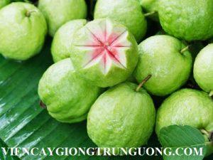 guava-26-1477455945