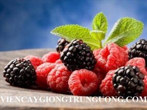 qua_mam_xoi_voi_tac_dung_ky_dieu_cho_suc_khoe_con_nguoi_1