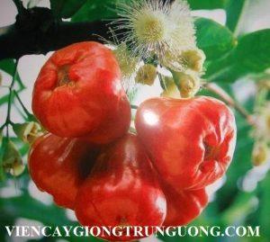 qua_roi_quen_thuoc_va_nhung_loi_ich_gay_choang_111553390_FLFV