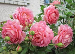 Blooms JC