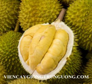sau-rieng-musang-king1488346027