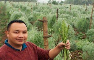 Phú Thọ: Trai làng trồng rau hoàng đế, cứ sáng ra là có 1 triệu đồng