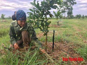 Ứng dụng công nghệ tưới tiên tiến vào trồng cây ăn quả