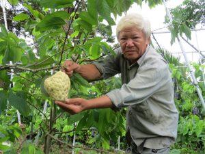 """Lão nông với vườn mãng cầu dai cho trái """"khổng lồ"""""""
