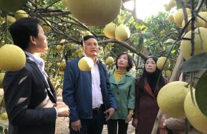 Nâng giá trị cây ăn quả đặc sản Hà Nội