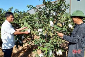 """Các """"tuyến"""" sản phẩm chuyên biệt giúp nông dân Kỳ Đồng làm giàu từ vườn mẫu"""