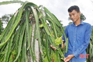 9X Hà Tĩnh khởi nghiệp làm trang trại cây ăn quả, thu nửa tỷ đồng/năm
